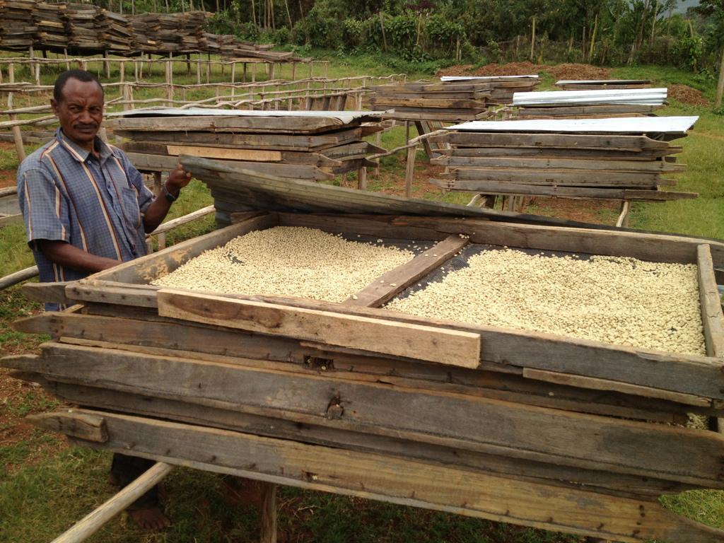 In der grössten Hitze werden die Kaffee-Bohnen zugedeckt.
